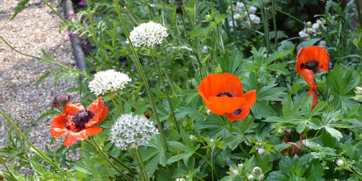 Open Gardens Weekend