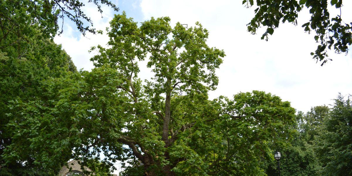 God's Trees