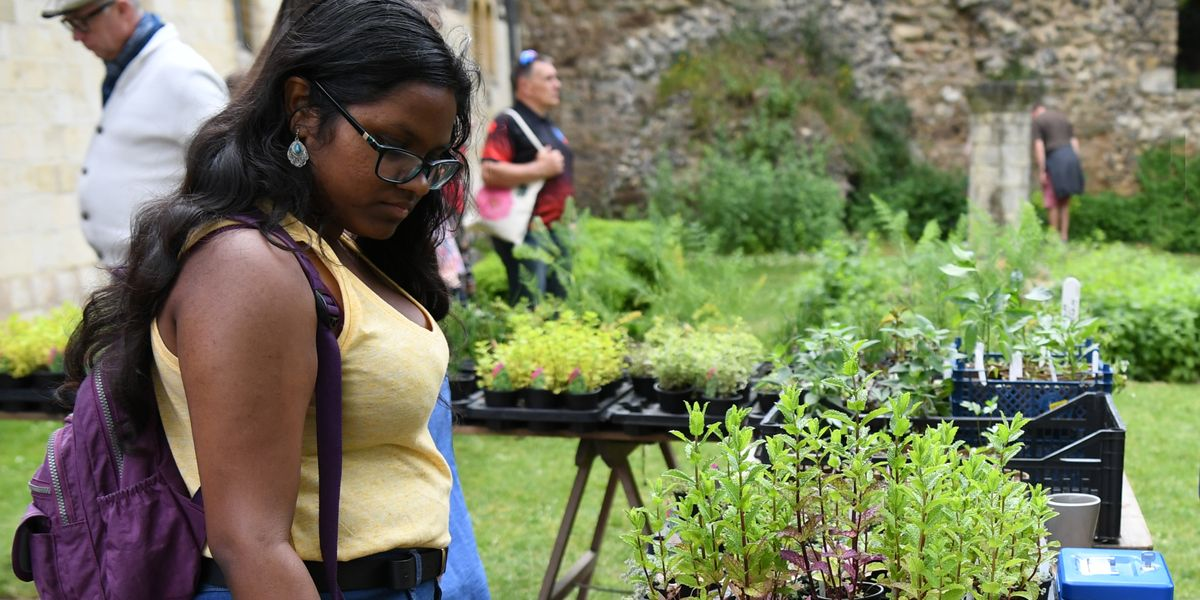 'I couldn't stay away' – a great weekend at Open Gardens