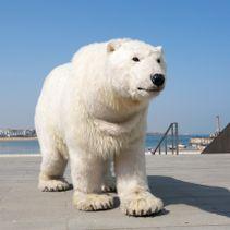 A Polar Bear to visit Canterbury Cathedral! (post)