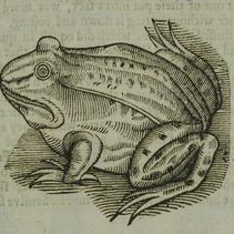 Early-modern Frogs